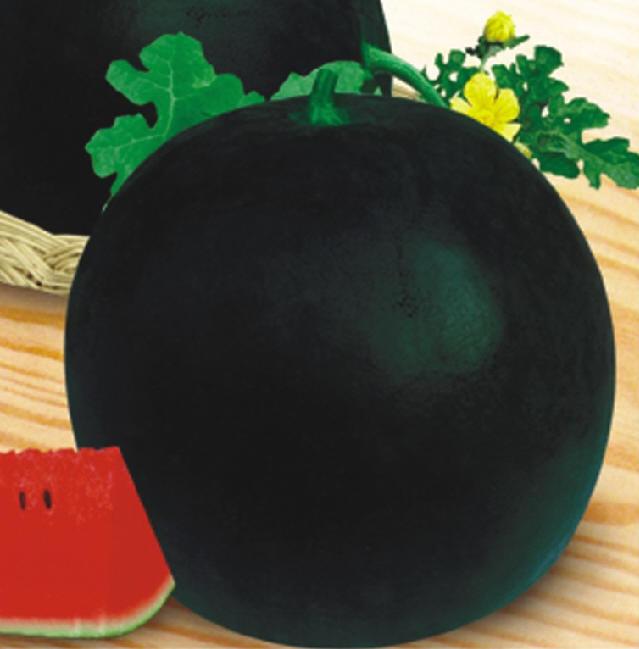 Buy Water Melon F-1 GS SUGAR EXPRESS