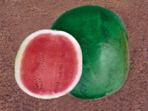 Buy Watermelon seeds - Chetan (NS 700)