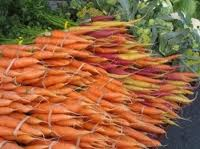 Buy Carrot seeds - Zino