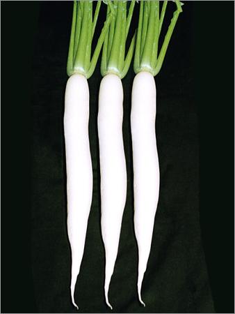 Buy Radish hybrid seed - R-33