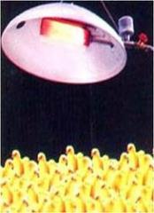 Chick Gas Brooder