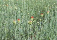 Floriculture Nets