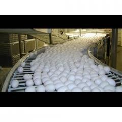 Egg Cross Conveyor