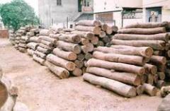 Shisham Wood