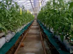 Bio Pesticides Bouncer
