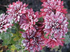 Bio fungicides Phytophos