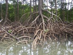 Phyto stimulants Bio-Root