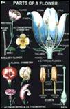 Chart (Genetics)