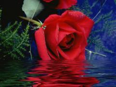 Gulab Jal (Rose Water)