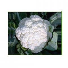 Cauliflower Seed