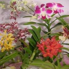 Orchid Plants Available