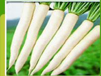 Seeds of garden radish