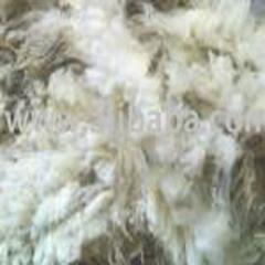 Merino Sheep Wools