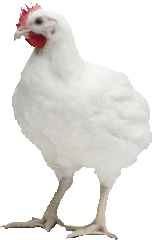 Broiler 1% Starter/Finisher Concentrate