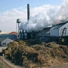 Sugar Mill Oil