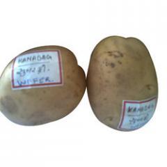 Kanabag Quality Potato