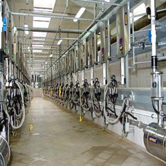 Dairies Chemical