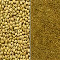 Coriander (Dhania Powder) Spices
