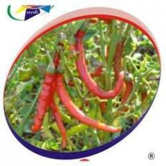 Chilli D- 27 Seeds