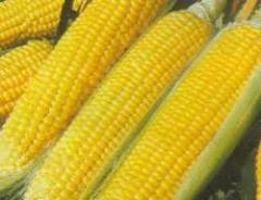 Maize Products (Yellow corn)