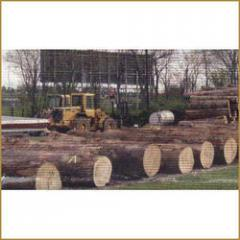 Noth American Timbers
