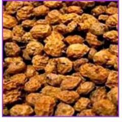 Curcas Seeds