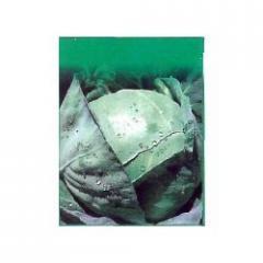 Cabbage Seeds Disha