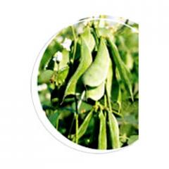 Dolicous Bean