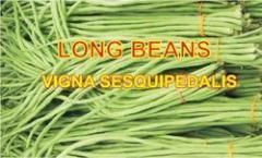 Board Beans