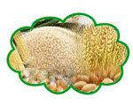 Cereal crops, grains