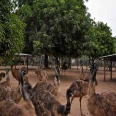 Training in EMU Farming & Management