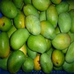 Raw Rajpuri Mango