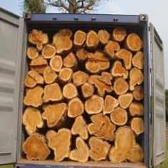 Trinidad Teak Wood (Round Loge)