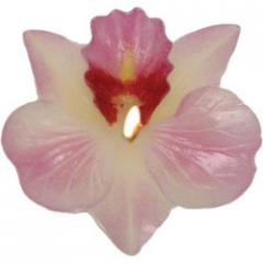 Dendrobium Candles