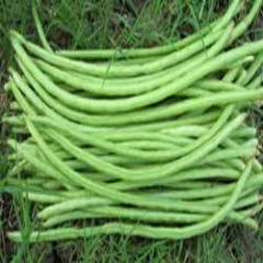 Cowpea Seed