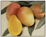 Alphonso Mango Puree