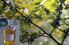 Eugalyptus Oil
