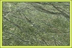 Bidasar Green (green Stone)