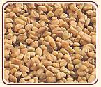 Spices-Fenugreek Seed