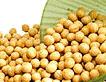 White Peas (Vatana)