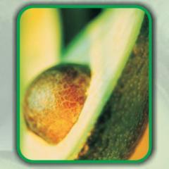 Avocado Oil (Persea Americana)