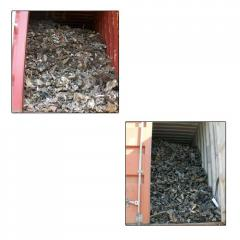 Shredded Steel Scrap
