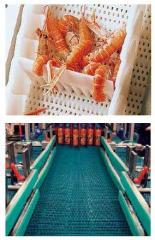 Plastic Modular Conveyor Belts