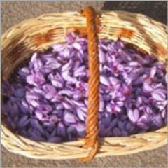 Coloring Saffron
