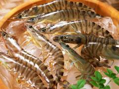 Prawns: Black Tiger and Vannamei – HOSO, H/L, PUD,