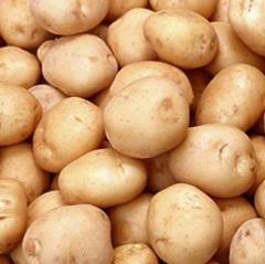 Holland Potato