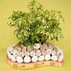 Decorative Indoor Plant