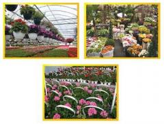 Horticulture Projects