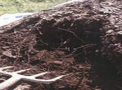 Biodine Compost Bio-stimulator