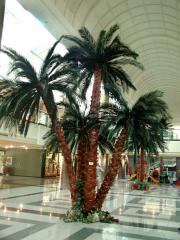 Preserved Palm Trees